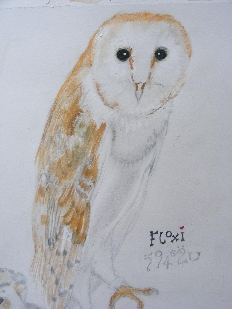 MR FLOX 2. MR FLOX 2.. Flox is coolio! MR  FLOX fun tub lol owl Bird