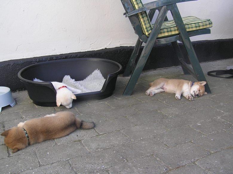 Much Tired, Very Asleep. .