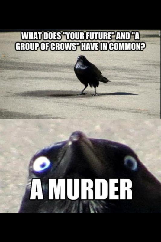 "MURDER. You better watch your back. Willi ""tit' ' FUTURE? "" efe! Crow murder"