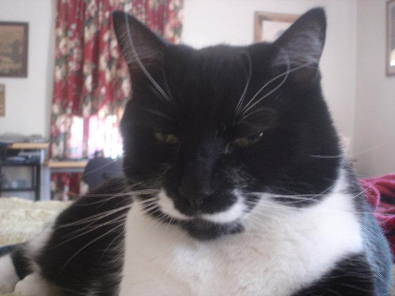 Mustache cat. .