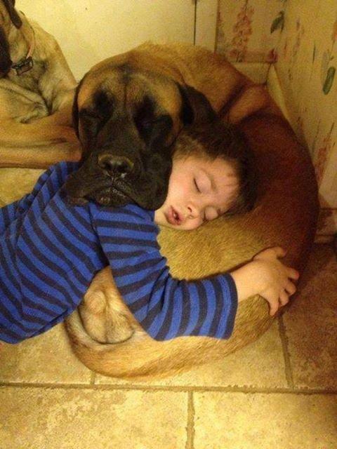 Mutual pillow. .