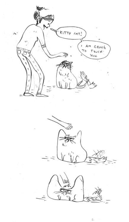 my cats attitude lately. . jerk cat Cats no