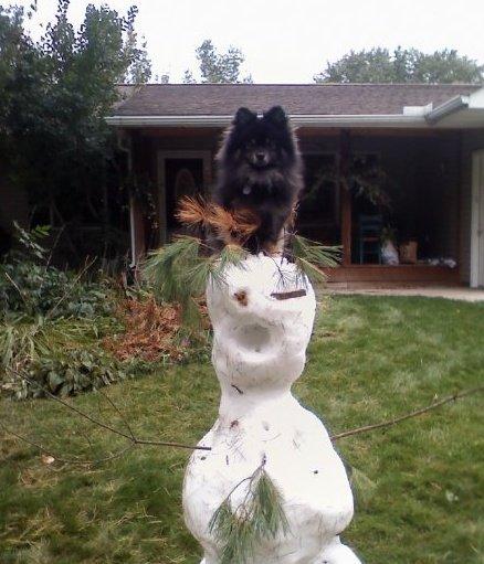 My dog on a snowman. Random :}.. Here's my snowman.