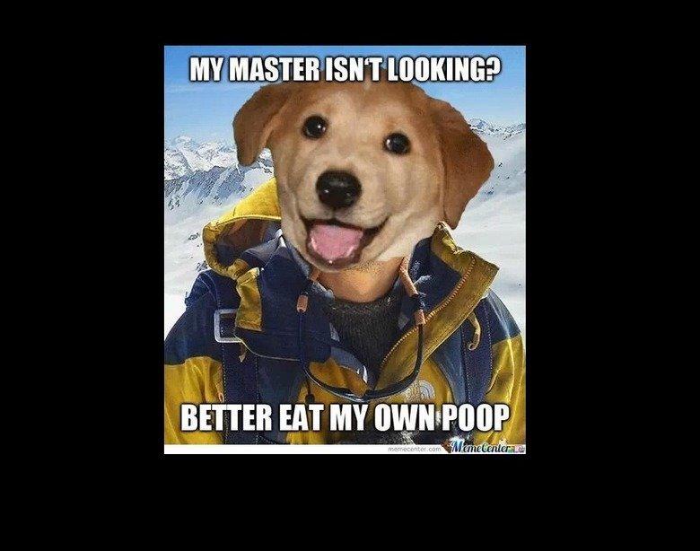 """My Dog. . ll. 'Bil III} HIT MY l d razidi"""" ,"""