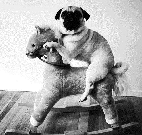 My people need me. .. Pug thread.