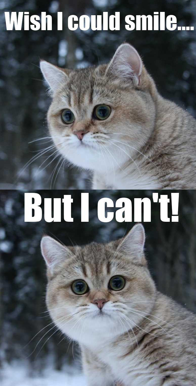 My reaction to bending/lok/pony posts. .
