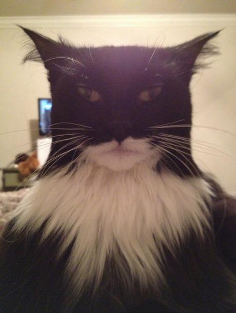 NANANANANANA CATMAN!. .. This is the cat Gotham deserves.