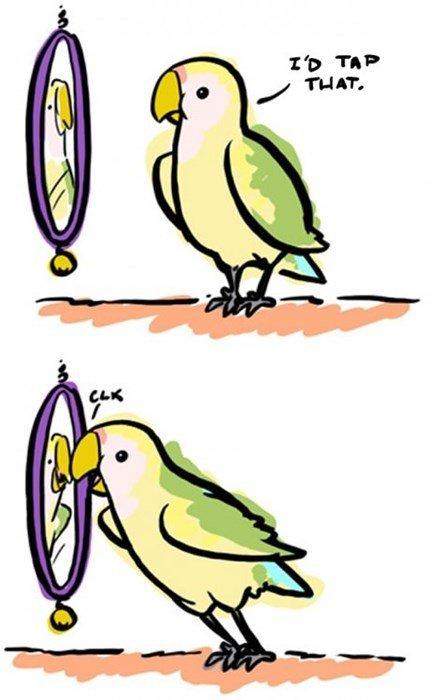 Narcissistic Bird. .. Aww. It's so cute.