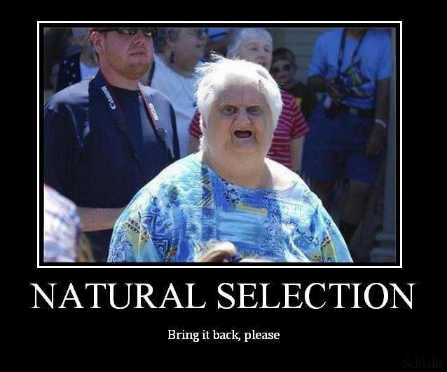 natural selection essay