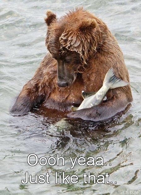 naughty bear is naughty. .. bass to mouth? Bears Animals