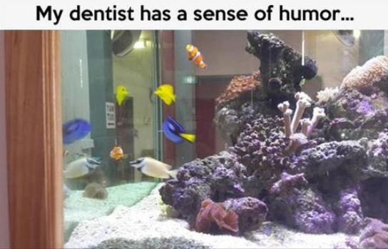 Nemo. .