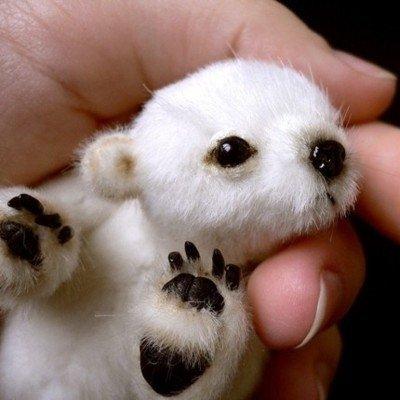 Hairless Polar Bear For gt hairless panda bear