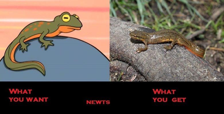 NEWTS. .