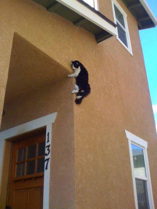 Ninja Cat. .