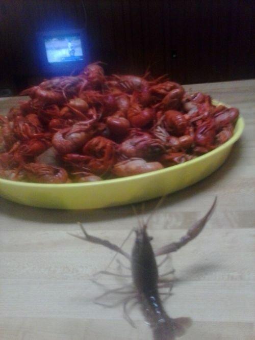 nooooo. .. has received his sacrifice. shrimp