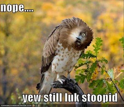 nope.. i'm still lookin.. giggle!