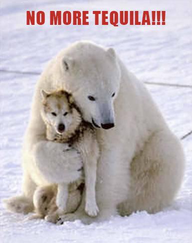 Not again!!!. . Polar Bear Alcohol