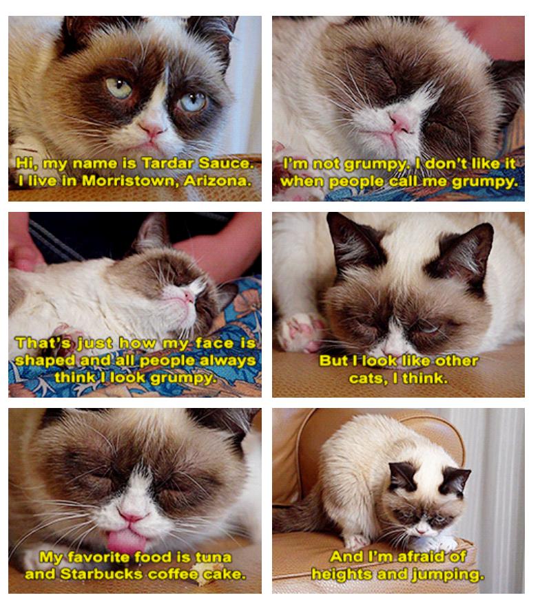 Not So Grumpy Cat. .. My favorite gif of Tarder Sauce. :) Noooooo not the tickles nooooooo!