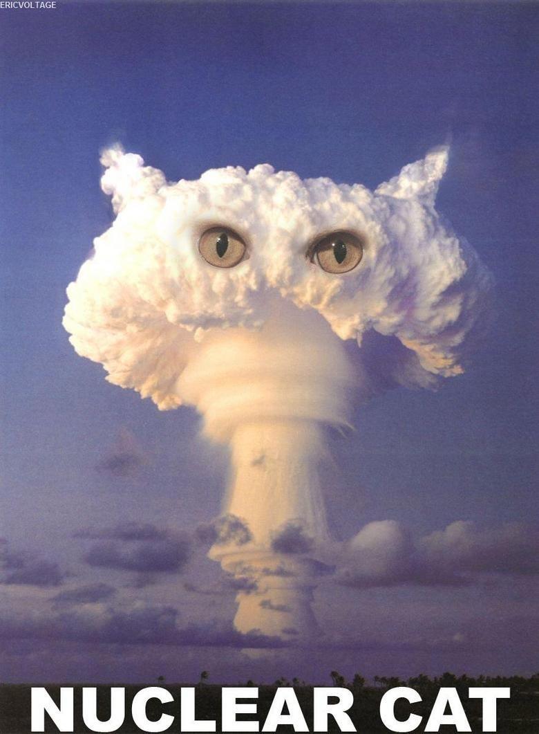 Nuclear Cat. O_o.. ERICVOLTAGE CAT. its a giant mushroom...maybe its friendly! friendly mushroom, special mushy friend! mushroom cloud looks catish