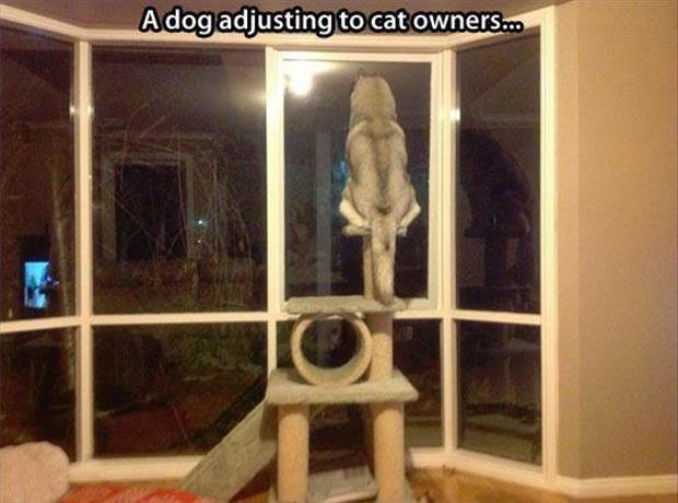 Nuff said.. .. Cat huskies are best huskies