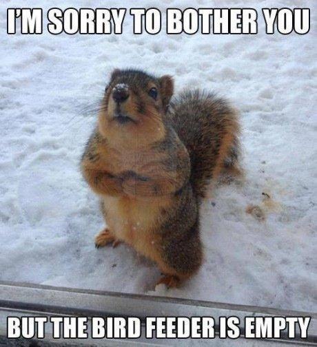 Nuts.... cute little fella, eh?. lloll FEE Squirrel