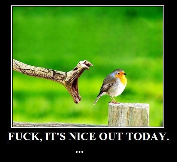 Oblivious Bird. .. Greatness oblivious fuck Bird demotivator