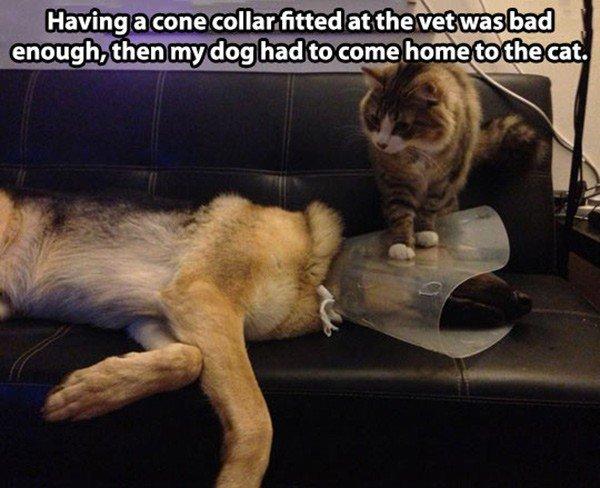 Oh, Cat. Source: dailyhaha.com.