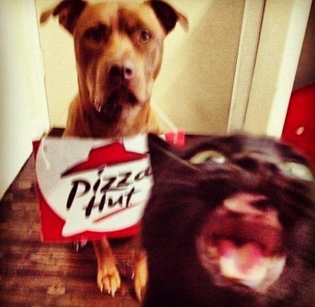 OH GOD NOT THE PIZZA DOG AGAIN FUCK!!!. sauce: imgur.