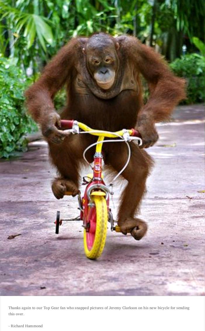 "Oh Richard.... Description. Mlit"" Elttil ""l Alla"" Ital Matr, fun rm hie. :' -we Trr, jeremy clarkson bicycle Chimpanzee ape monkey"