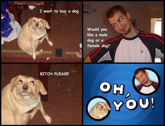 oh you!. . H I want to buy :1 dog Would you like 41 male dog or 41 I female dog? BUSH PLEASE