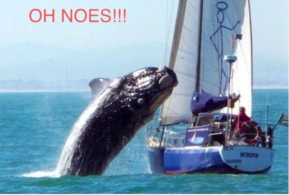 """OH NOES. .. guy on boat: """"FUUUUUUUUUUUU"""""""