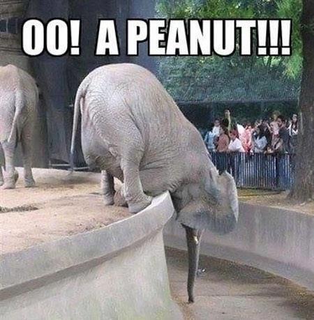 oo! a peanut!!!. .