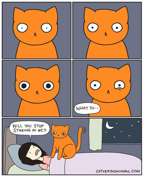 orange. . HILL 'mu