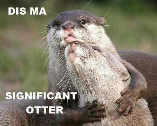 Otters. I love 'em..