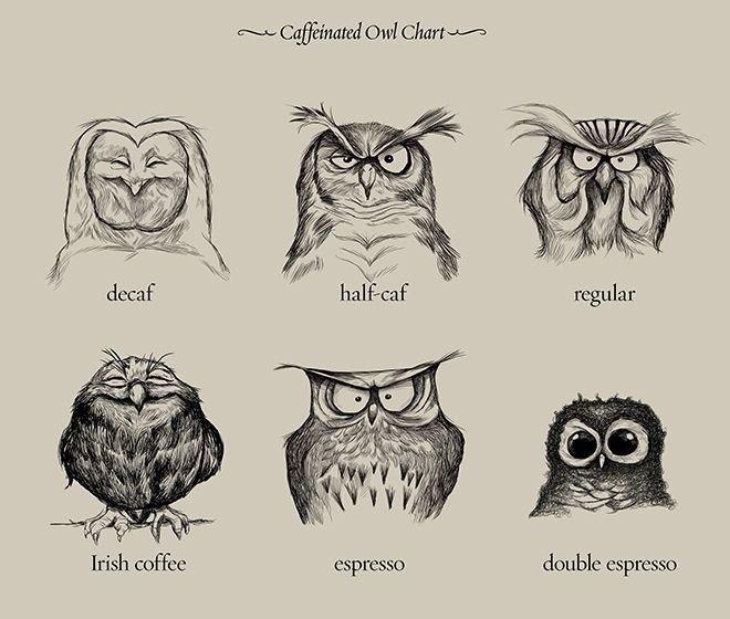 Owls and coffee.. . double espresso. Zelda.