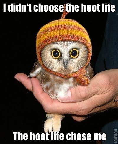 Owls. #Hootlife #yolo. Thtt HIE. ITS OWL TIME, ! owl hootlife