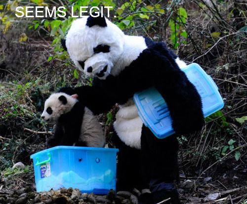 PANDA EXRPESS!!!!. PROM NIGHT DUMPSTER PANDA.. Seems Legit seems legit Panda