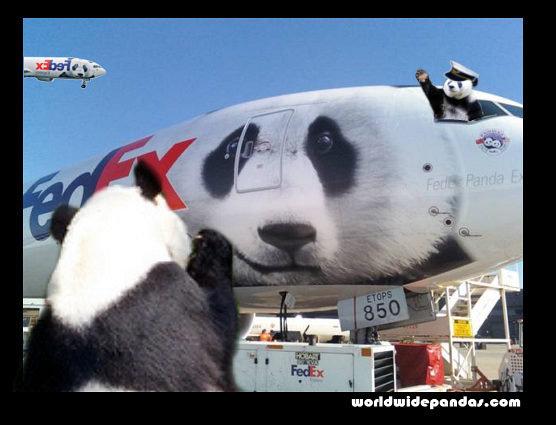 pandas take to the air!. pandas take to the air! (OC). N Th 1 i