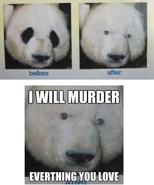 Pandas. . I Wwll EVREYTHING Yoo mu:. he kinda look like a Polarbear now