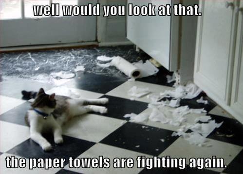 Paper Towel Gangs On The Street. .