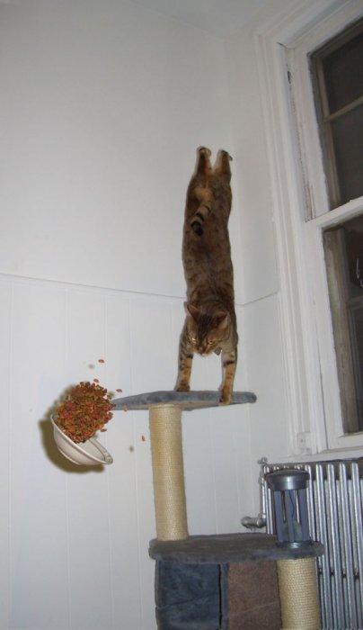 parkour. . cat parkour