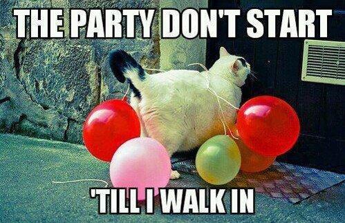 party cat. .