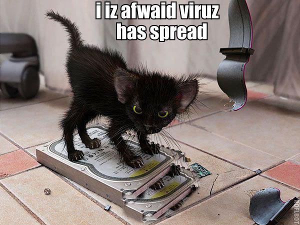pc repair kitteh. pc repair kitteh.. evil kitteh looks evil