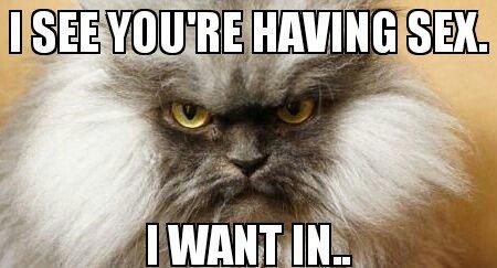 Pedo Kitty. .