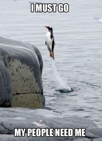 Penguin. .