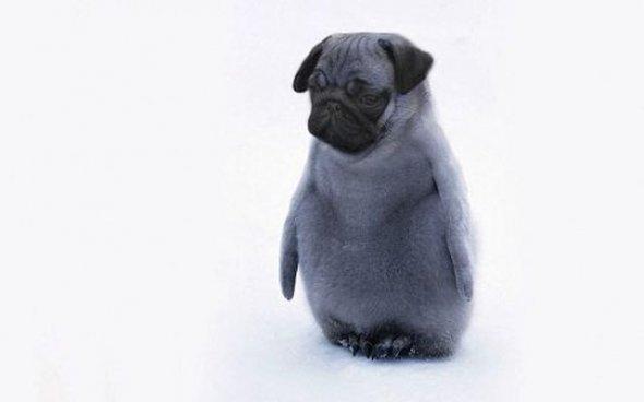 penguinchickpug. .