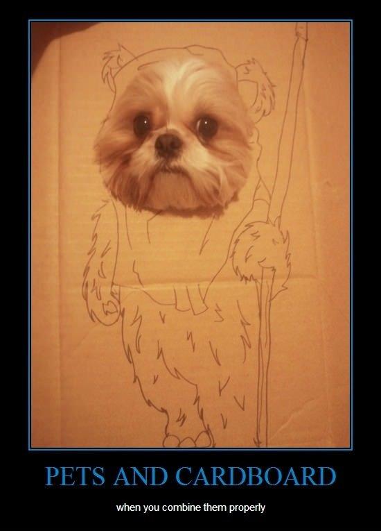 """Pets and cardboard. . Bi if ill """" ill! , lillol! ll D (illgal. N D E if t Alli, RI}"""