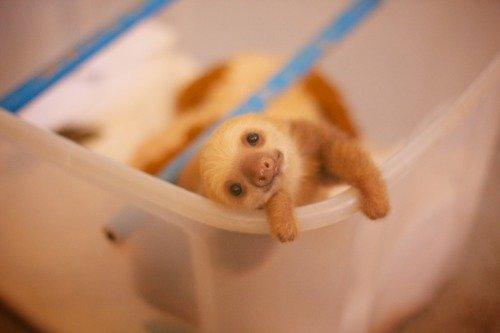 Photogenic baby Sloth. 10/10 would cuddle.