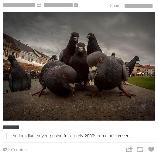 Pigeons. Pigeons. the ' far :3 Mi rap notes 'millai 5: '