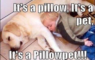 Pillow Pet. type description here.. Pillow Pet bubba